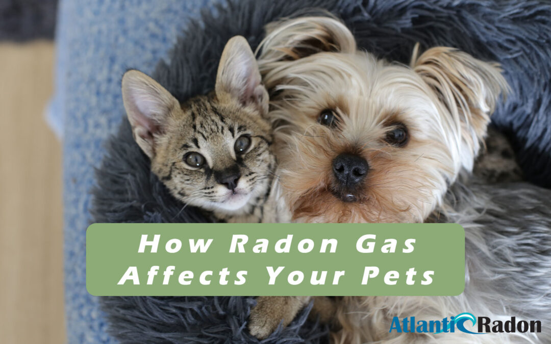 How Radon Affects Your Pets